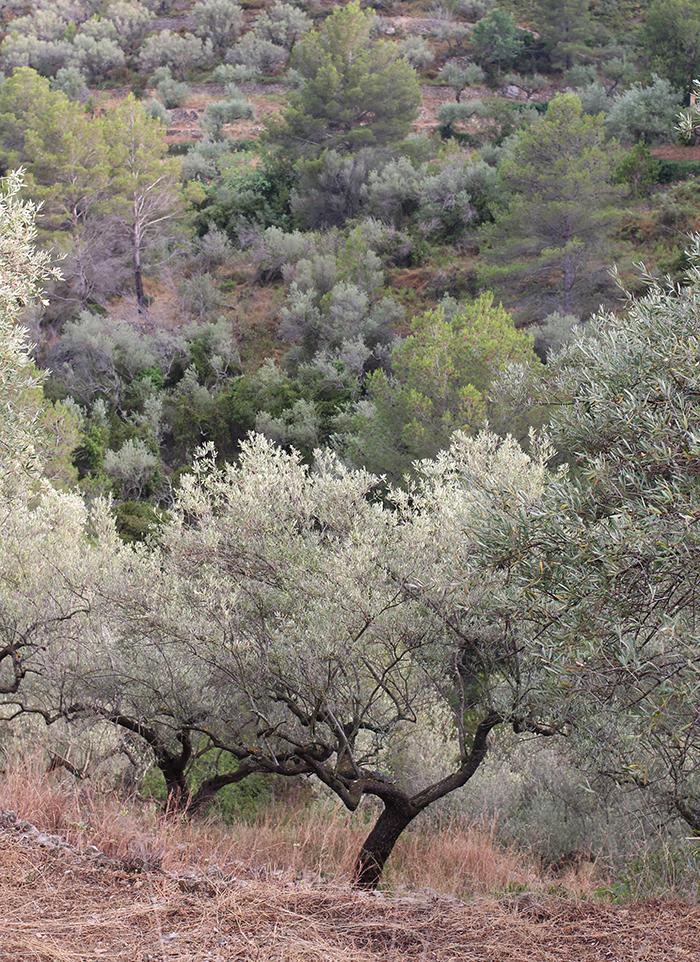 Cosmik olivier